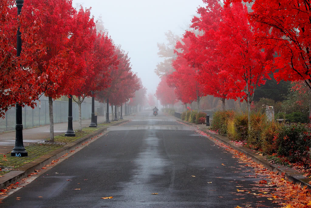 A beautiful fall in Corvallis, Oregon, home to the Oregon State University