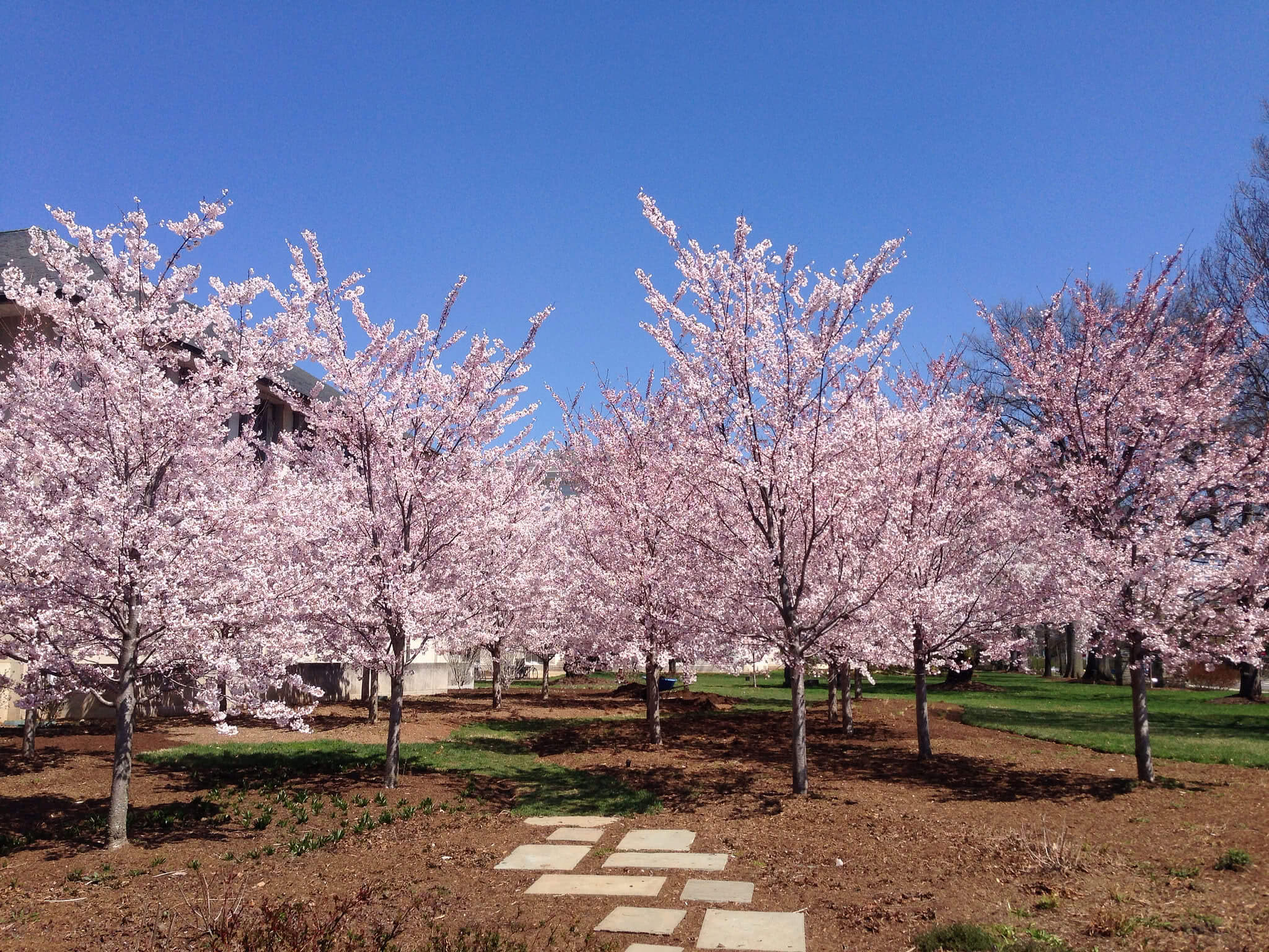 American University is the greenest college campus in the US.