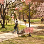 Student runnng inside University of Dallas campus surrounded with pink flower trees.
