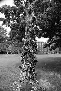 A black and white picture of shoes hanging on a tree.