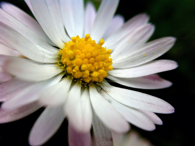 """Photograph of a flower, representing a """"late bloomer"""" teen who needs help with their college search. What happens if your children don't want to go to college?"""