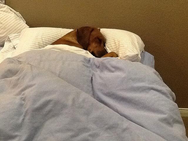 Test prep tips - get a good night's sleep