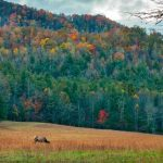 Rolling forested hills in North Carolina.