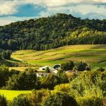 Rolling green and yellow hills in Wisconsin.