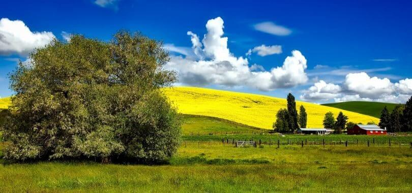 Green and yellow sprawling fields.