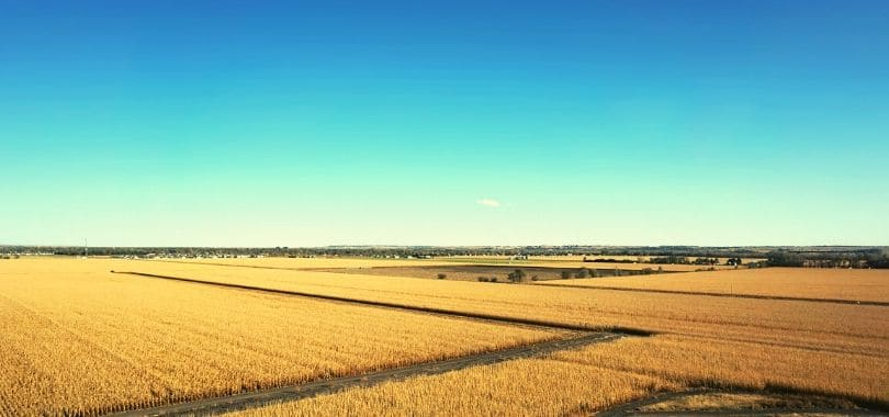 Fields of wheat below a blue sky.