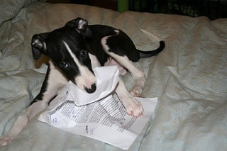 My dog at my homework is one of many poor excuses