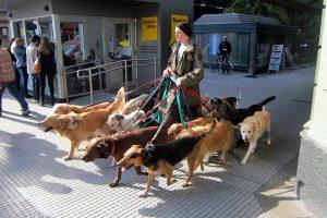 Flickr user Wally Gobetz - Dog walker