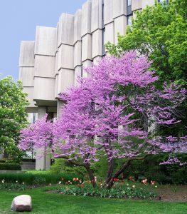 Northwestern University - Best Medium-sized Colleges