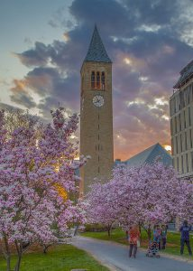 flowering blossoms of upstate New York