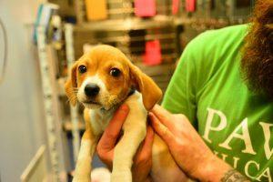 Great summer job - helping at an animal shelter