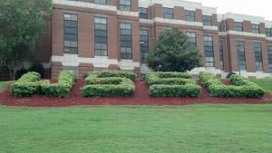 Grass shaped into WSSU outside a campus building.