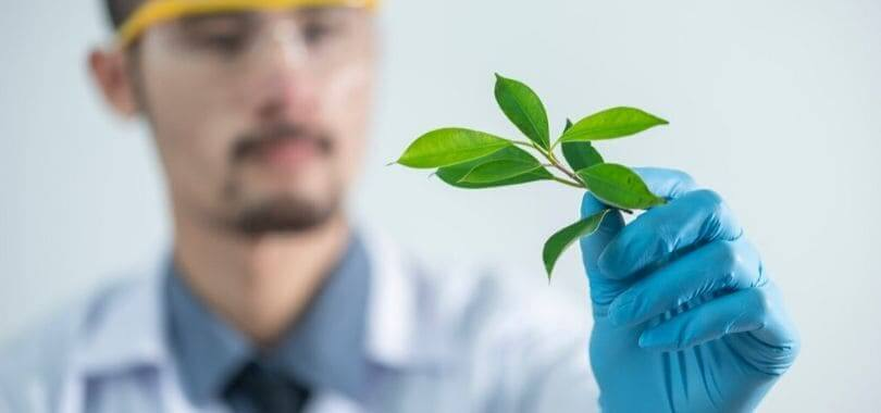A scientist holding a plant in their hand.