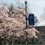 SUNY New Paltz school building behind the pink flower tree.