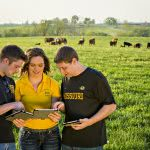 Three students are discussing while holding their tabs on a green field - with cows in the background.