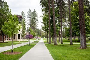 Whitworth University campus tree-lined sidewalk and building.