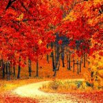 A path winding through autumn trees, with leaves on the ground.