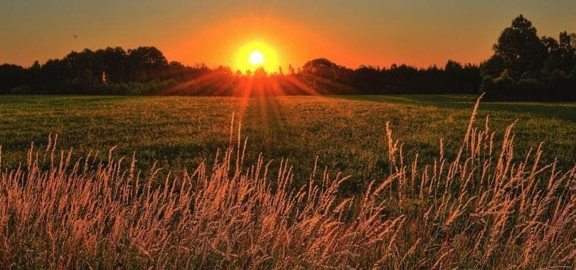 A sunrise over an open grassy field, with wheat in the forefront.