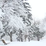 A snow-covered bench surrounded by snowy trees.