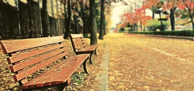 Two benches with autumn leaves covering the ground.
